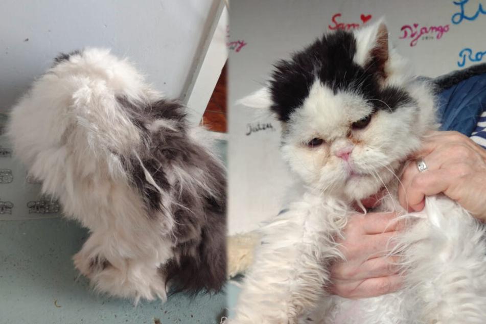 Deutlich mitgenommen und mit vollkommen verfilztem Fell kam Joschi bei der Tierhilfe an.