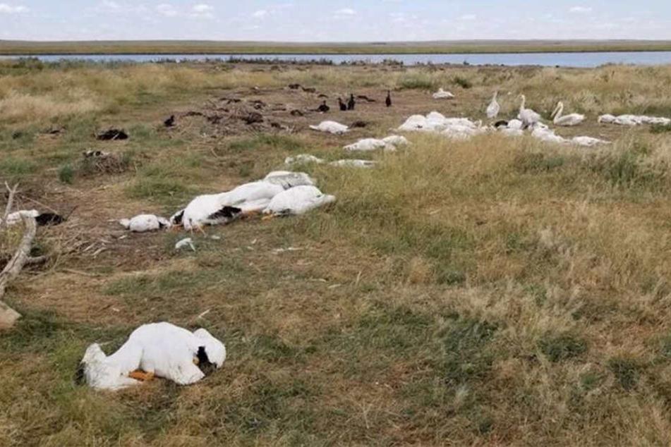 Mindestens 11.000 Vögel starben bei dem Unwetter.