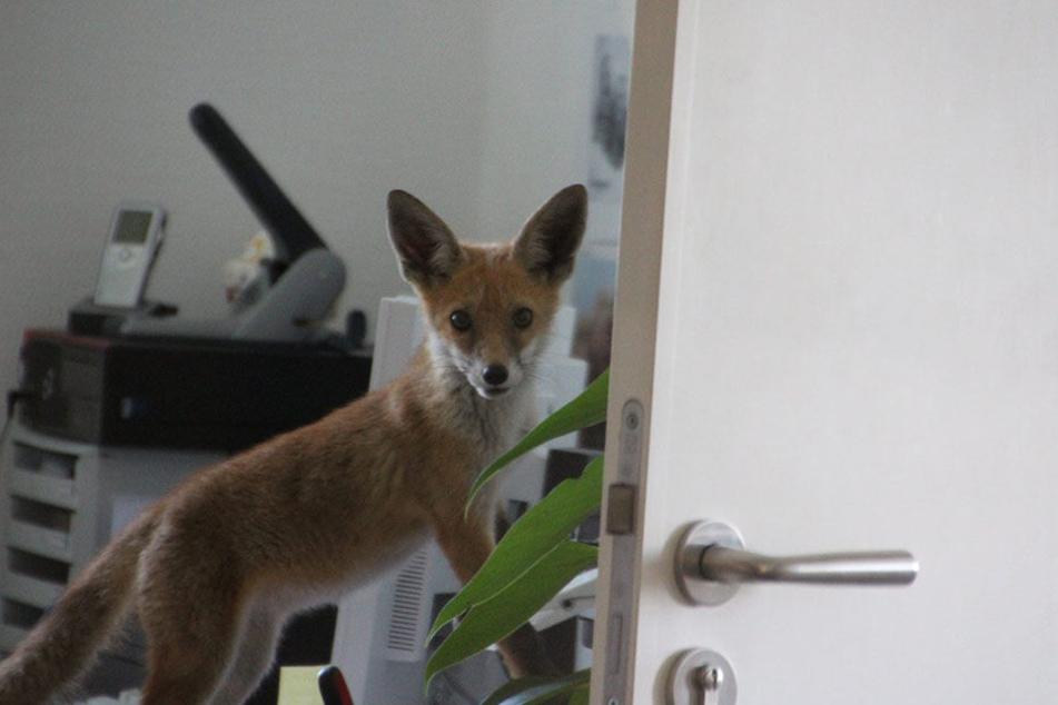 Der kleine Mann auf Entdeckungstour im Büro der Personalchefin.