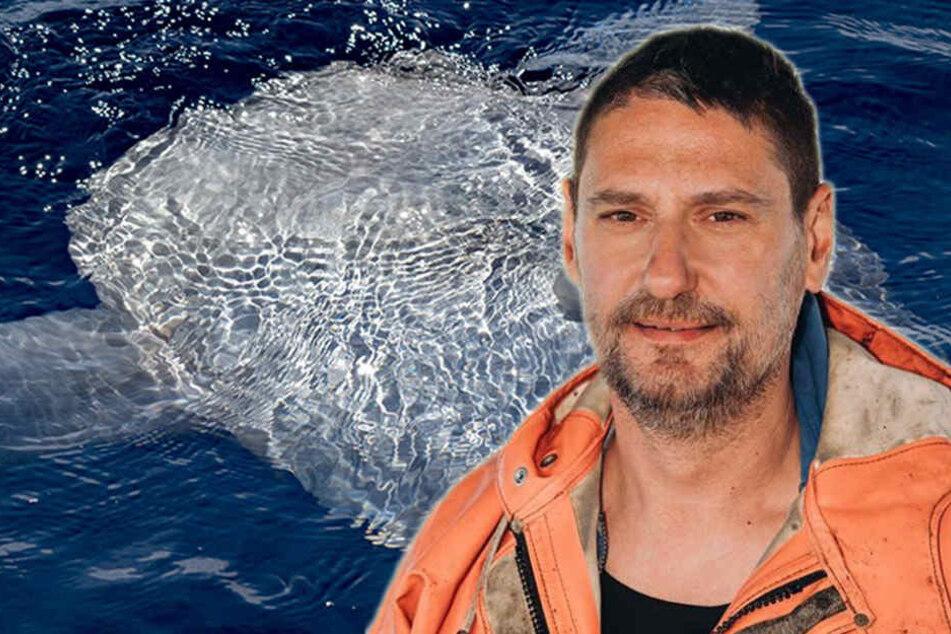 """Riesige Kreatur verfängt sich im Netz, Fischer greift zum Messer: """"Lasst die Bestie leben"""""""