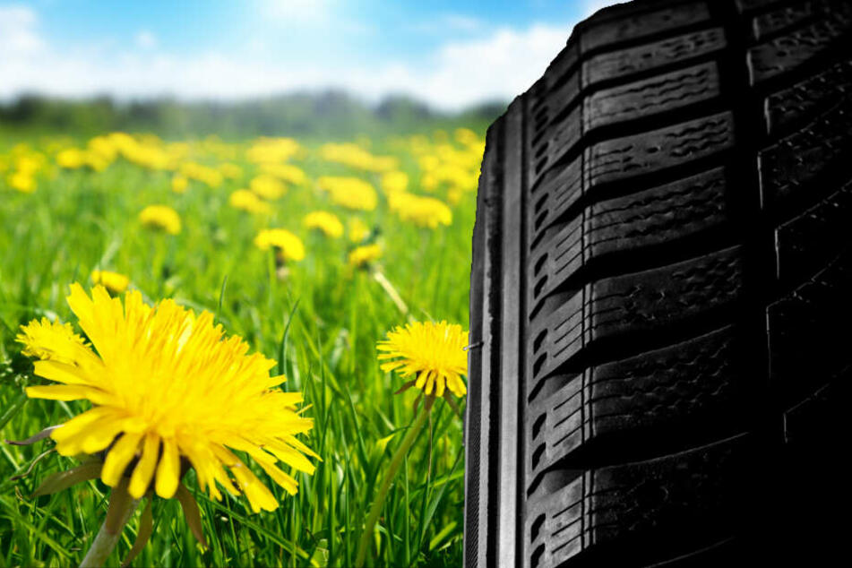 Reifen aus Löwenzahn könnten eine Alternative zu ihrem auf Erdöl basierenden Vorbild sein.
