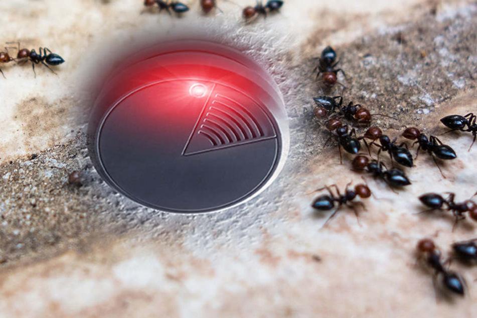 Ameisen lösen Feueralarm in Dresden aus