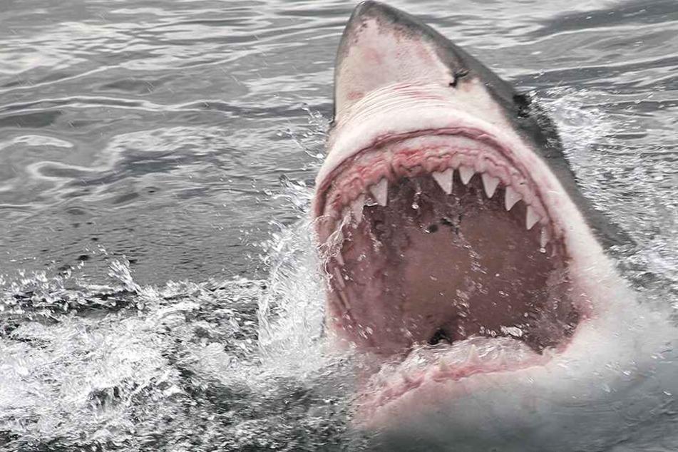 Brutale Attacke: Der Hai tötete sein Opfer (Symbolbild).