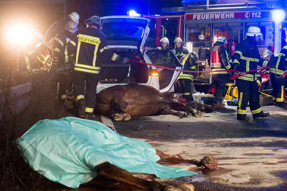 In Nordrhein-Westfalen sind zwei aufgeschreckte Pferde auf die Autobahn gerannt und bei einem Unfall gestorben.