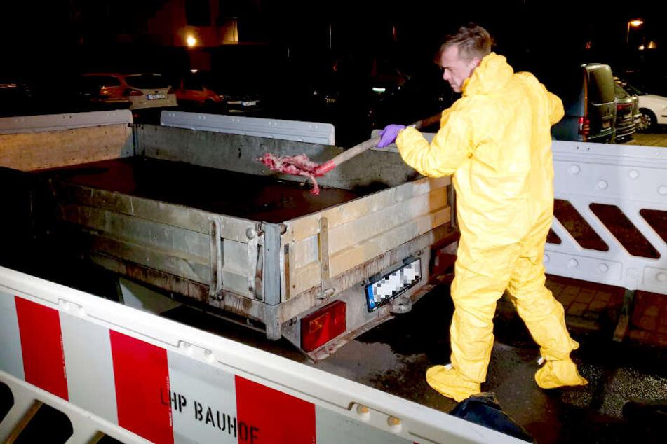 Verdacht auf Schweinepest! Tierkadaver in Potsdam sichergestellt