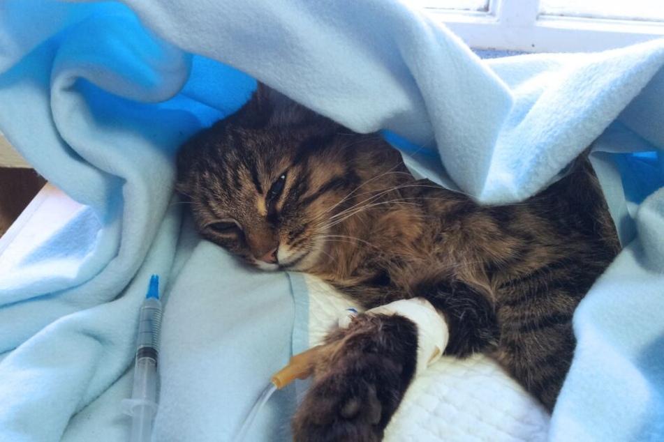 Bei Tierfund: Wer muss für die Behandlung von Katze oder Hund zahlen?
