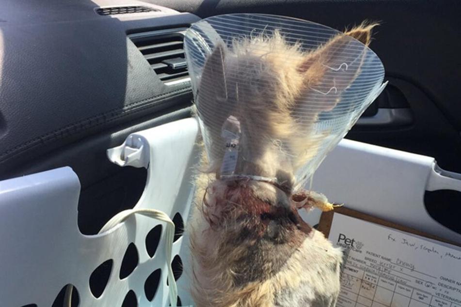 Chewy hatte mehrere Verletzungen.
