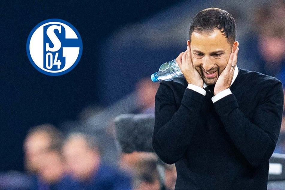 """Tedesco verrät Schalkes Erfolgsgeheimnis: """"Haben gewi****""""!"""
