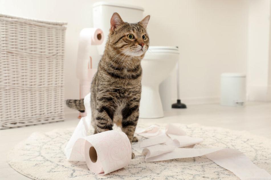 Ob Schlafzimmer oder Bad: die Katze ist schon da.