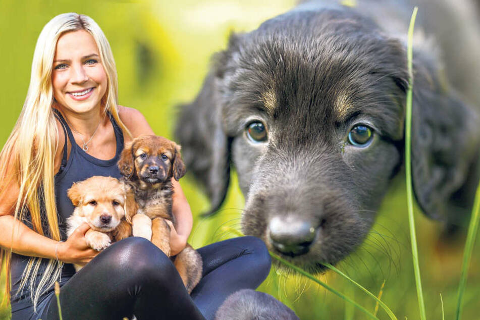 Zum Knuddeln! Schlagersängerin Sophie Venus (23) liebt es, mit den Hundebabys zu  spielen.