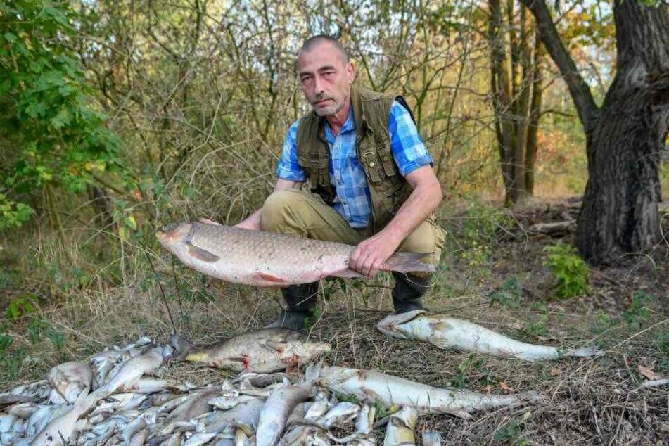Rund 400 Fische verendeten wegen des plötzlich einsetzenden Sauerstoffmangels.