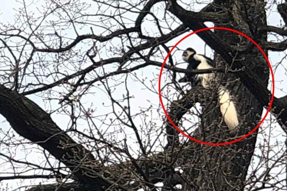 """Ria """"verschanzte"""" sich in einem Baum."""