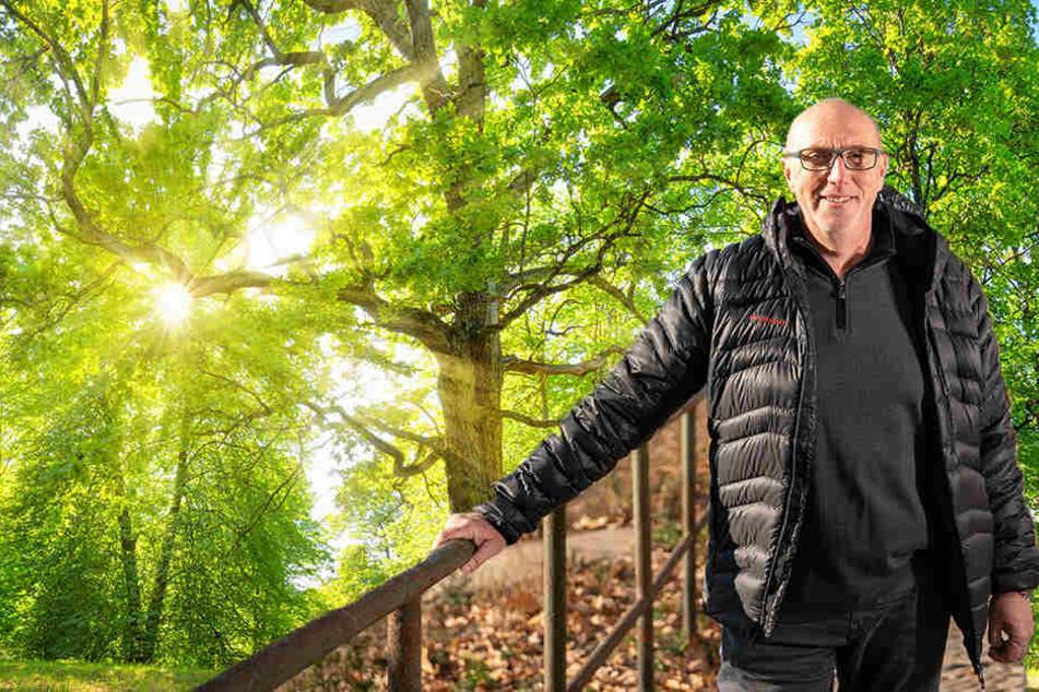 Nanu, die CDU will plötzlich Bäume auf Parkplätze pflanzen