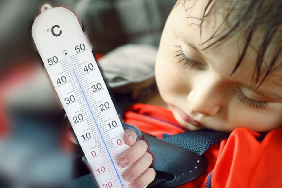 Hitze im Auto: So schnell wird es für Kind und Hund zur Todesfalle!