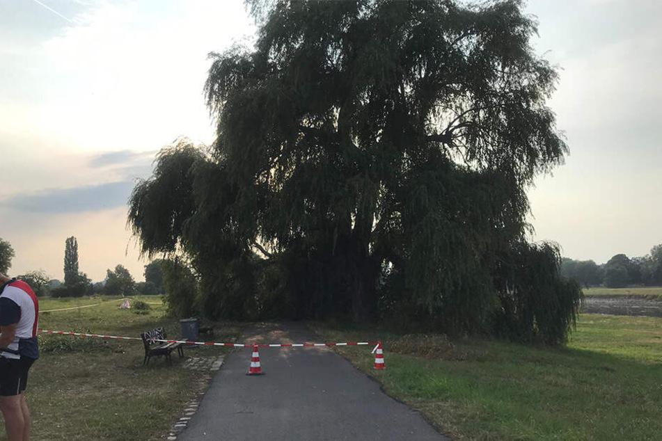 Auch den Elberadweg traf ein Baum - wortwörtlich.