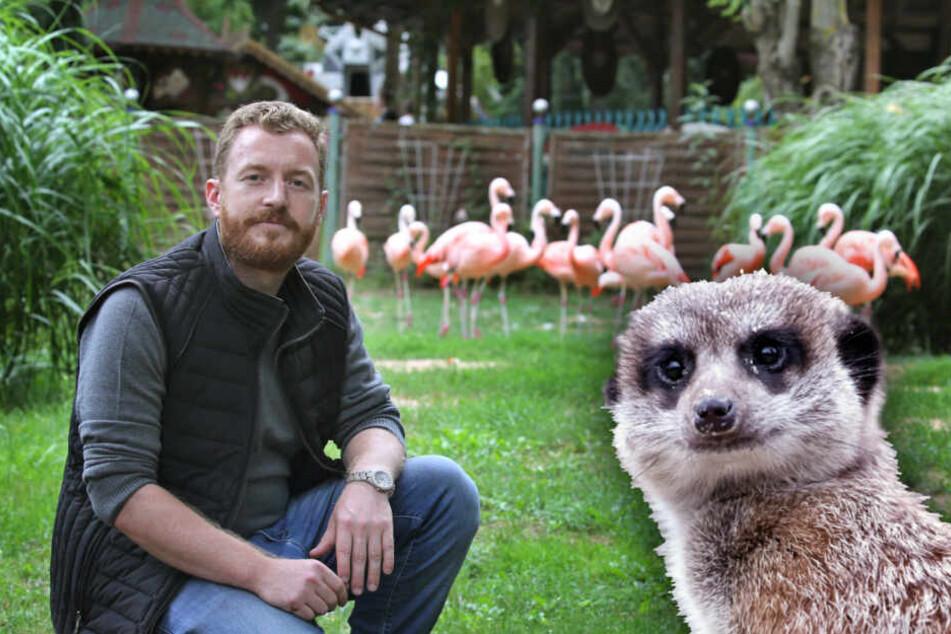 Diese verrückten Sachen werden aus Zoos und Parks geklaut