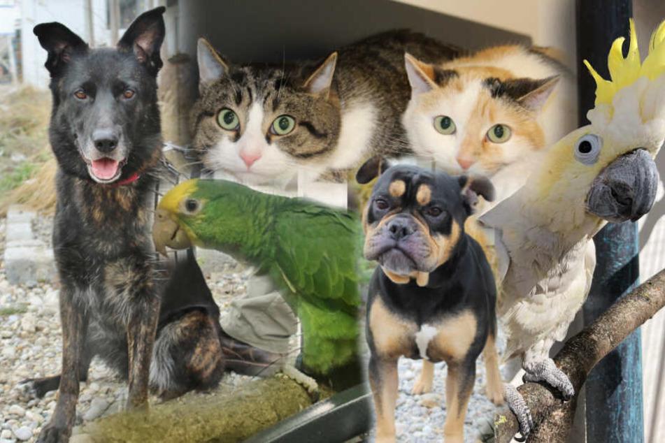 Verstoßen und auf der Suche: Diese Tiere wollen geliebt werden!
