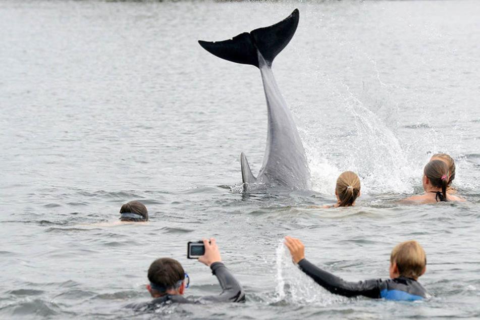 Es flippert: Kinder schwimmen mit Delfin in Ostseebucht