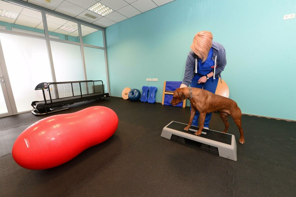 For four-legged friends, physiotherapy can make a world of difference