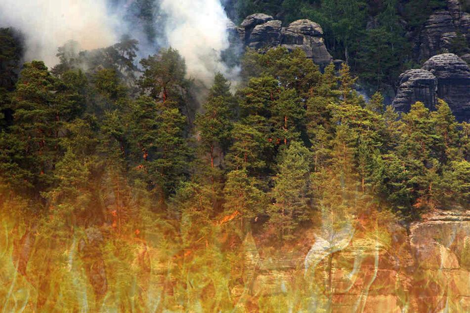 Nach Waldbrand in Sächsischer Schweiz: Gemeinde bleibt auf den Kosten sitzen!