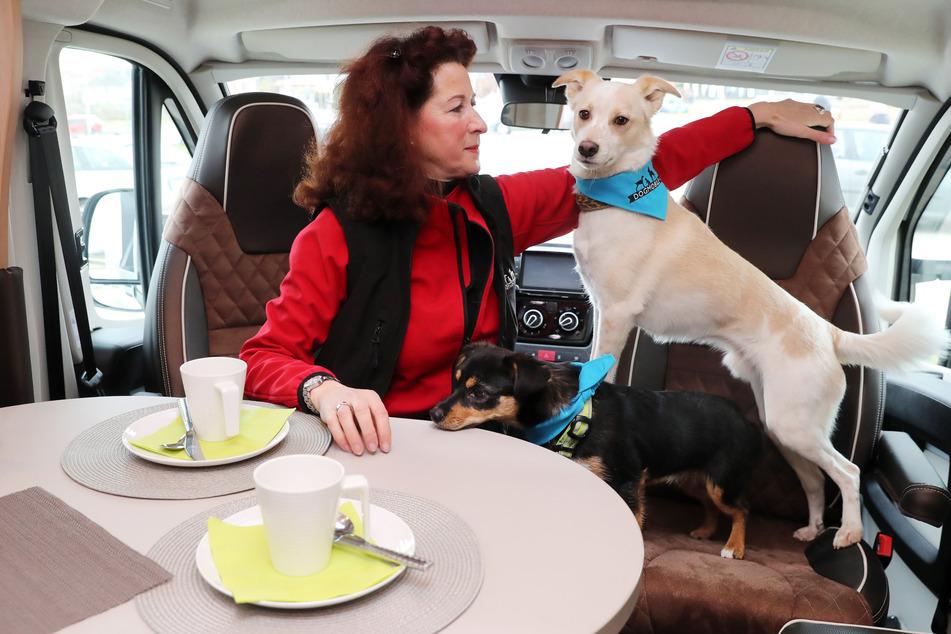 Hunde willkommen: Auch Vierbeiner genießen scheinbar das Abenteuer auf Rädern.