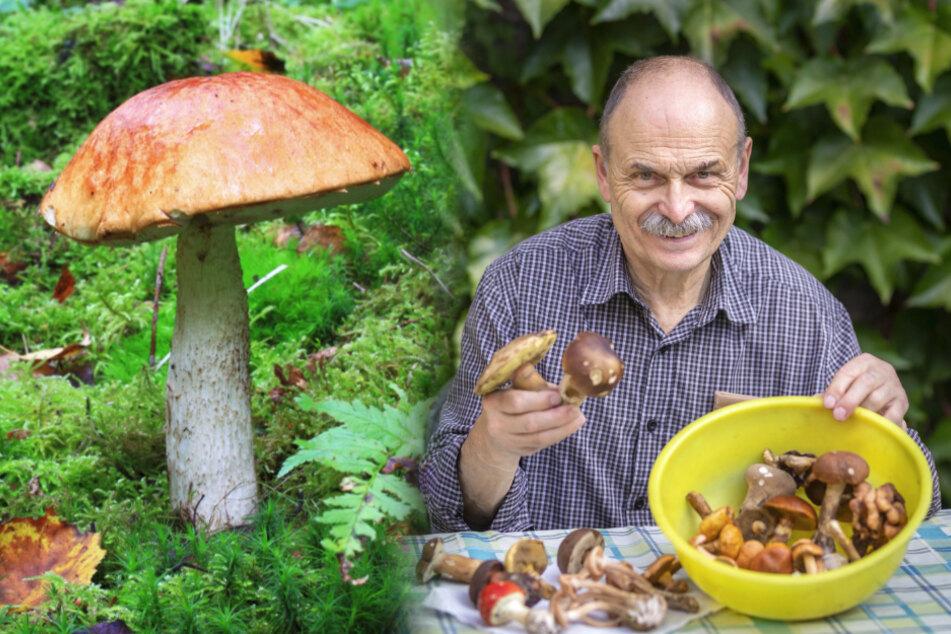 Wird 2020 endlich das lang ersehnte Pilzjahr? Sammler sind vorsichtig optimistisch
