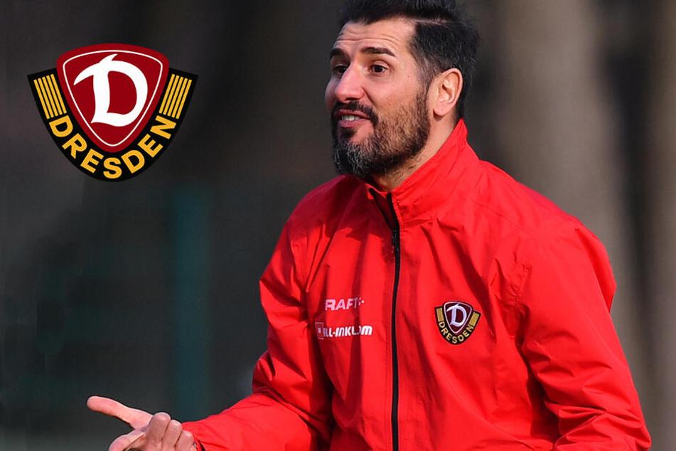 Frust wegen fehlender Moral: Dynamo-Trainer platzt der Kragen