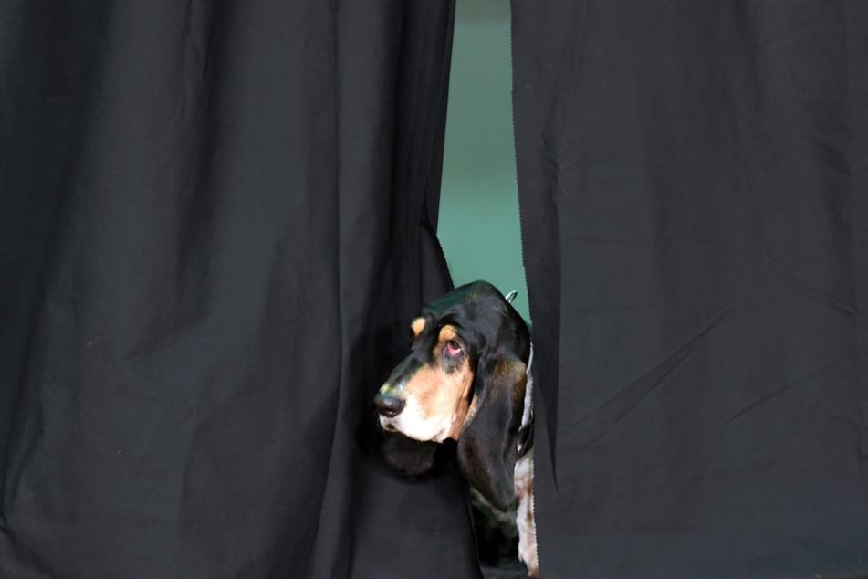 Vorhang auf für die Vierbeiner: Das Opernhaus hat Hunde für eine neue Produktion gesucht.