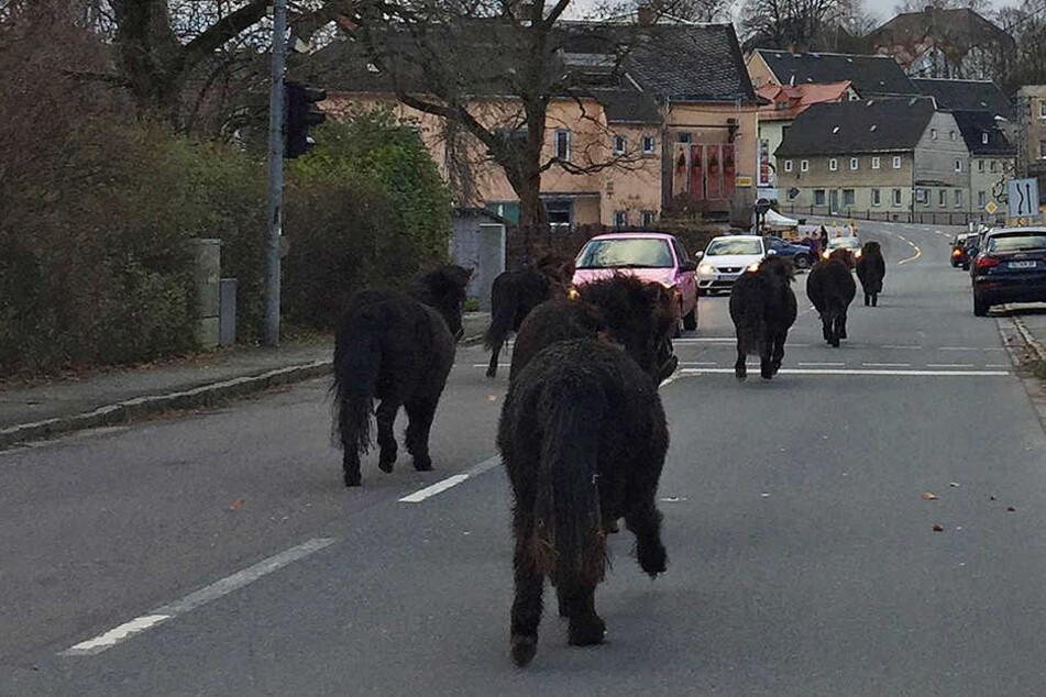 Der Ponys waren unter anderem auf der Straße der Einheit in Wüstenbrand unterwegs.