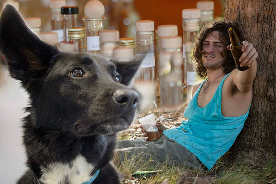 Der besoffene Junge hatte sich in einen Vorgarten schlafen gelegt. Ein Hund fand ihn. (Symbolbild)