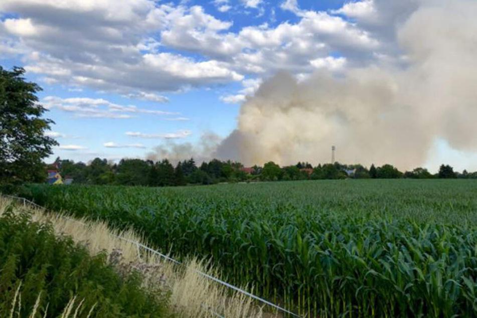 Im Dresdner Stadtteil Bühlau brennt ein Feld.
