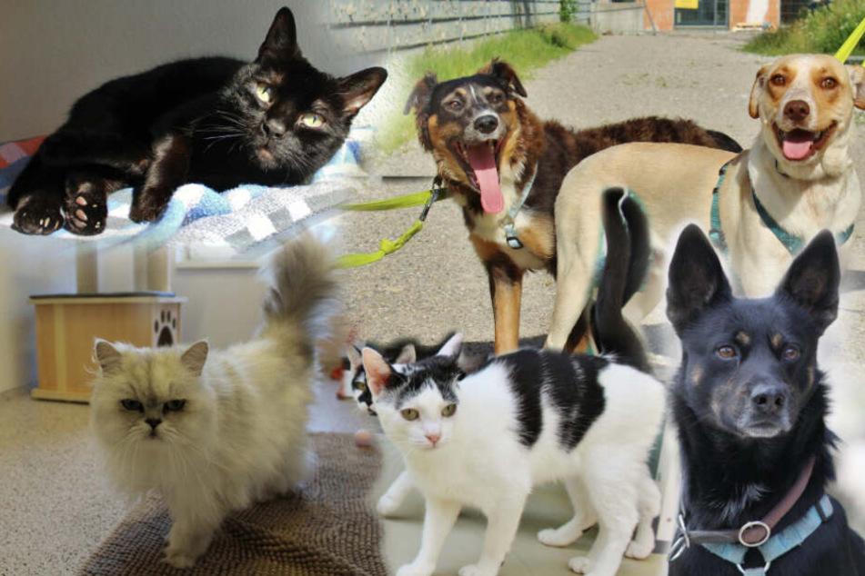 6 besondere Katzen und Hunde: Bei ihren Geschichten bleibt kein Auge trocken