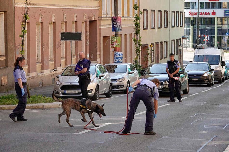 Auch ein Spürhund ist am Donnerstag im Einsatz.
