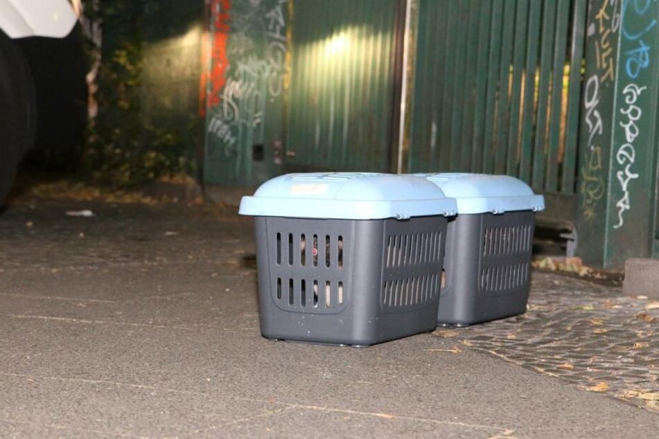 Die Einsatzkräfte konnten einen Hasen und zwei Katzen vor dem Brand retten.