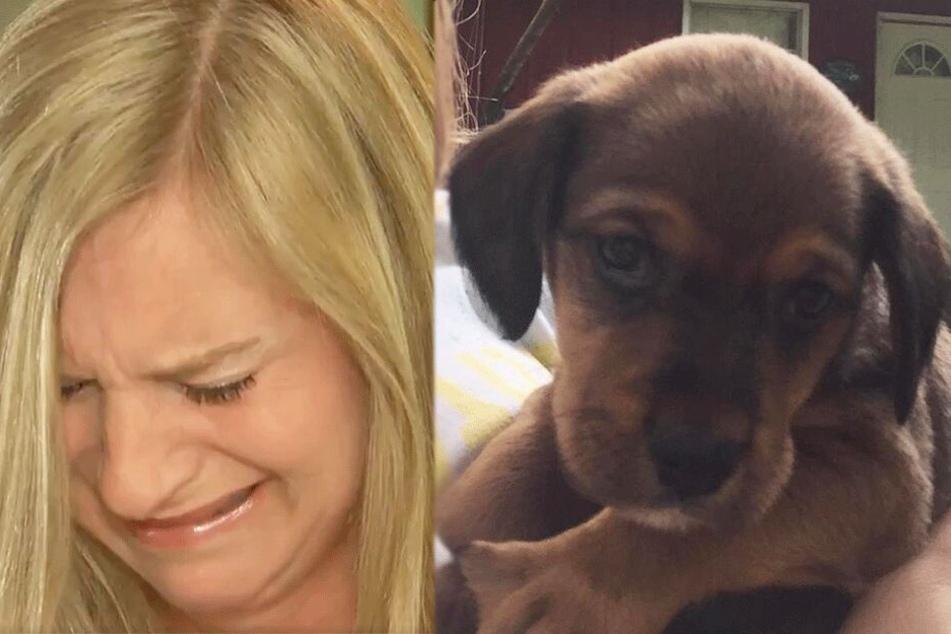 Familie sucht verzweifelt ihren Hund: Nach zwei Tagen finden ihn die Kinder erhängt im Wald