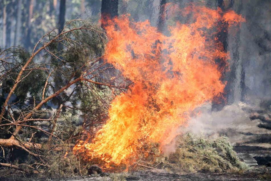 Aufgrund der Trockenheit gibt es derzeit im Kölner Stadtgebiet eine hohe Waldbrandgefahr (Symbolbild).