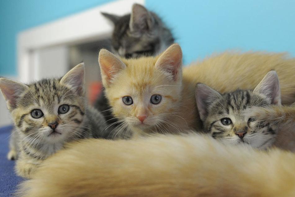 Vier kleine Katzen sind in einem Karton ausgesetzt worden (Symbolbild).