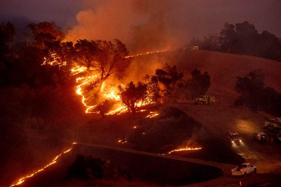 Die Feuerwehrleute kämpfen unter anderem mit selbst gelegten Gegenfeuern um die unkontrollierten Flammen einzudämmen.