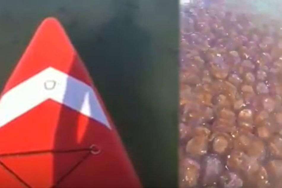Schleim-Invasion im Badeparadies: Elf Tonnen gefährliche Quallen an Küste geschwemmt