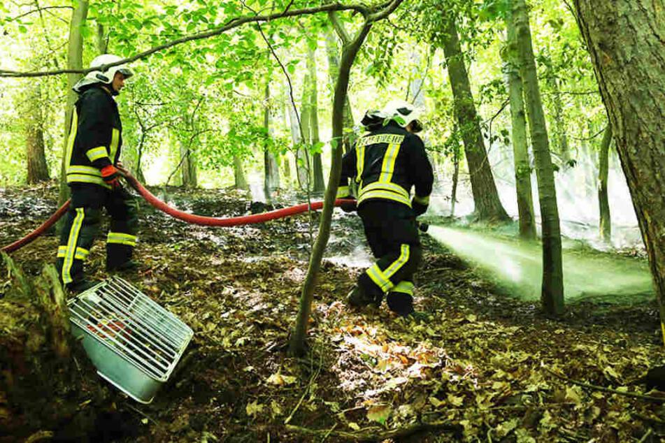 In einem Waldstück neben der B6 bei Meißen ist am Samstagvormittag ein Waldbodenbrand ausgebrochen.