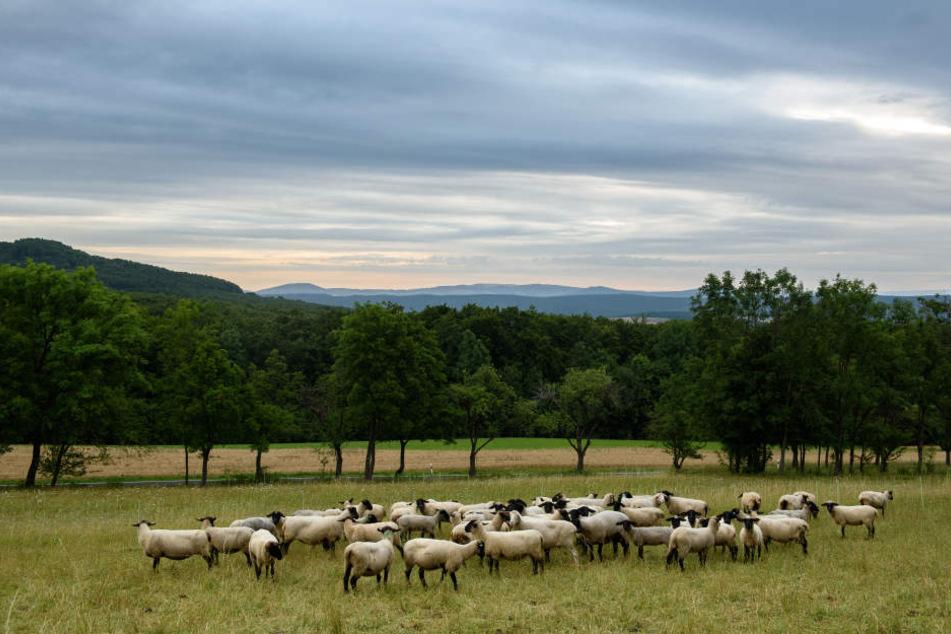 Schon bald könnte die Rhön zum dritten bayerischen Nationalpark gewählt werden.