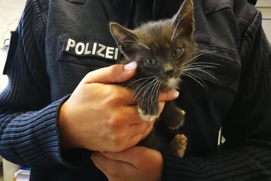 Eine Polizistin hält eine der jungen Katzen in ihren Händen.