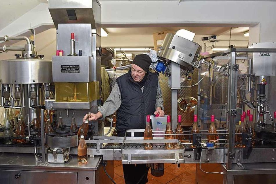 Schwiegervater Joachim Lehmann (59) überwacht in seinem Weinkeller in Diesbar-Seußlitz die Abfüllung des Schielers.