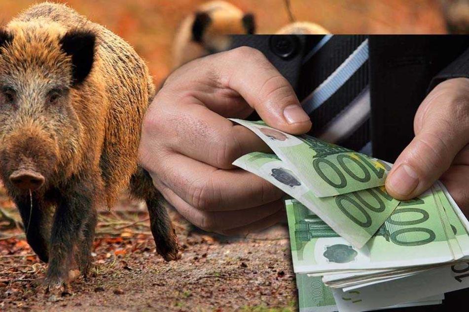 """Nicht täuschen lassen: Ein """"Schweinegeld"""" machen die Jäger mit der  Abschussprämie für Wildschweine sicher nicht."""
