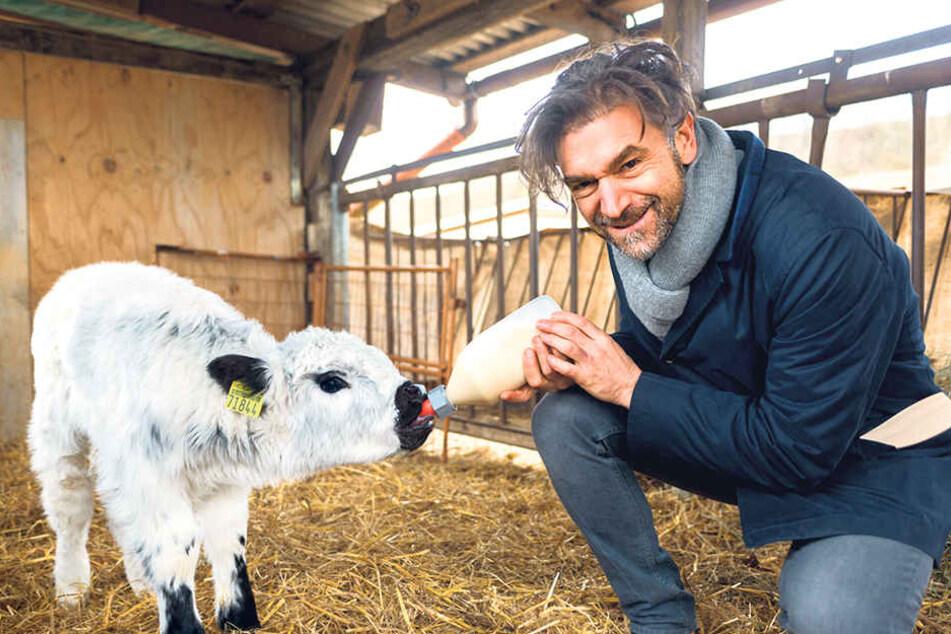 """""""Kochsternstunden""""-Organisator Clemens  Lutz gibt dem erst zwei Wochen alten Kälbchen Milch. Rund drei Jahre darf der  kleine Bulle auf der Weide grasen."""