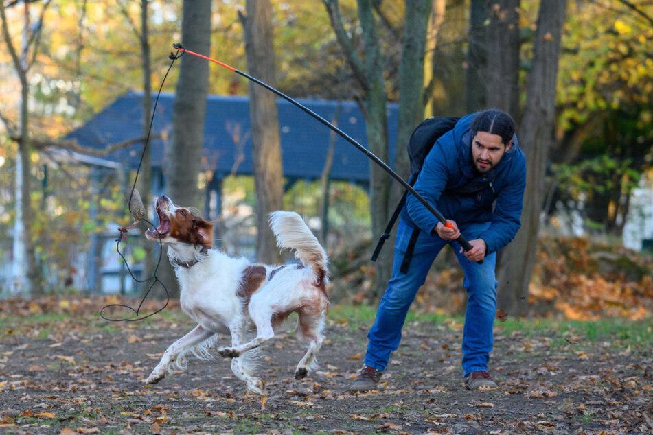 Jagdtrieb der Hunde in geordnete Bahnen lenken: Dazu nutzt Marcel Sickel auch diese Angel.Zusammenarbeit Mensch und Hund: Marcel Sickel versteckte einen Köder, Kaido suchte und fand ihn.