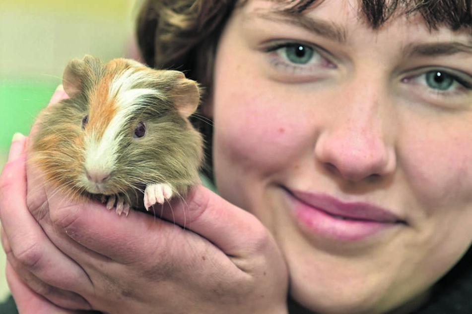 Tierpflegerin Charlotte Apley (18) mit Meerscheinchen Saskia.