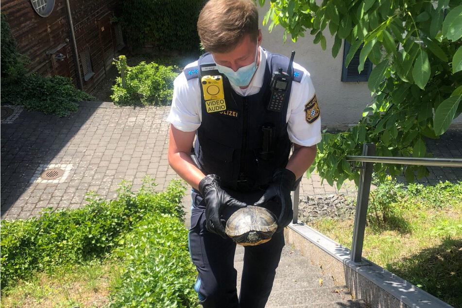 Ein Polizeibeamter rettete eine Gelbwangenschildkröte von der Straße und nahm sie in Obhut.