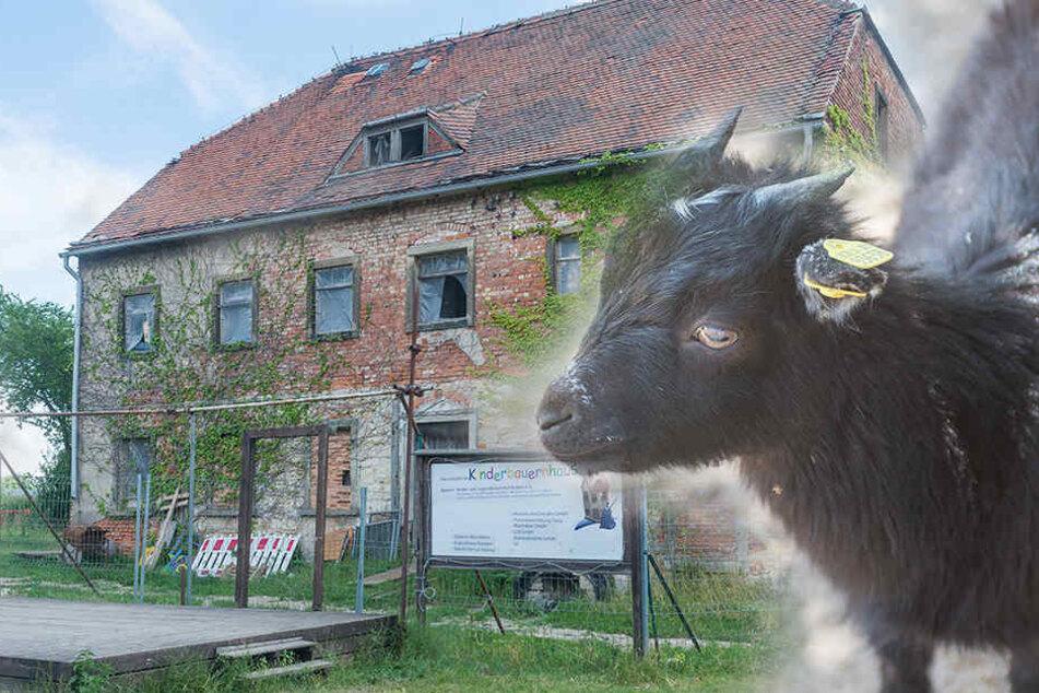 Dieser Dresdner Bauernhof kann sich jetzt über eine dicke Finanz-Spritze freuen