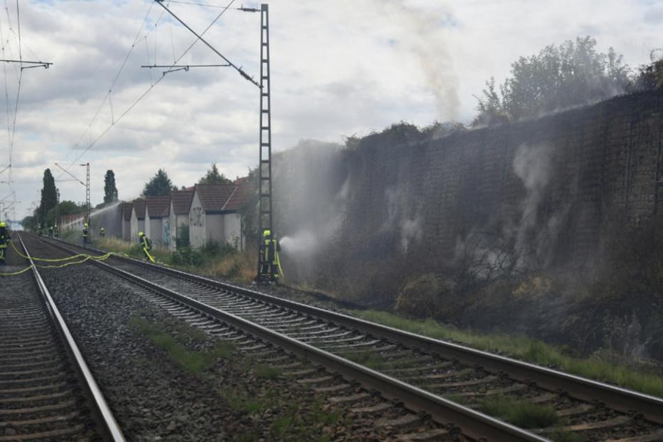 Die trockenen Sträuche an der Schallschutzmauer gerieten in Brand.